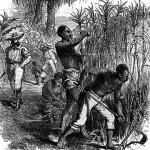 plantation1a_360