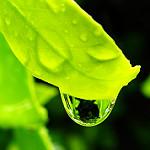 Leaf Drop by Marg